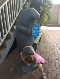 D with manatee
